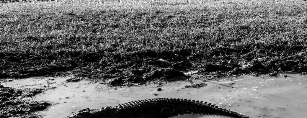 Are you afraid of crocodiles? How to overcome your hidden fears. A step by step process to defeating your inner fears.