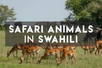 Safari Animals in Swahili