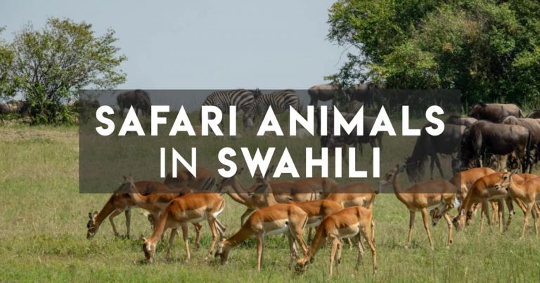 All the Tanzania/Kenya Safari Animal Names in Swahili