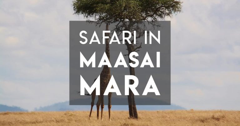 Safari in Maasai Mara (Kenya) during the Wildebeest Migration
