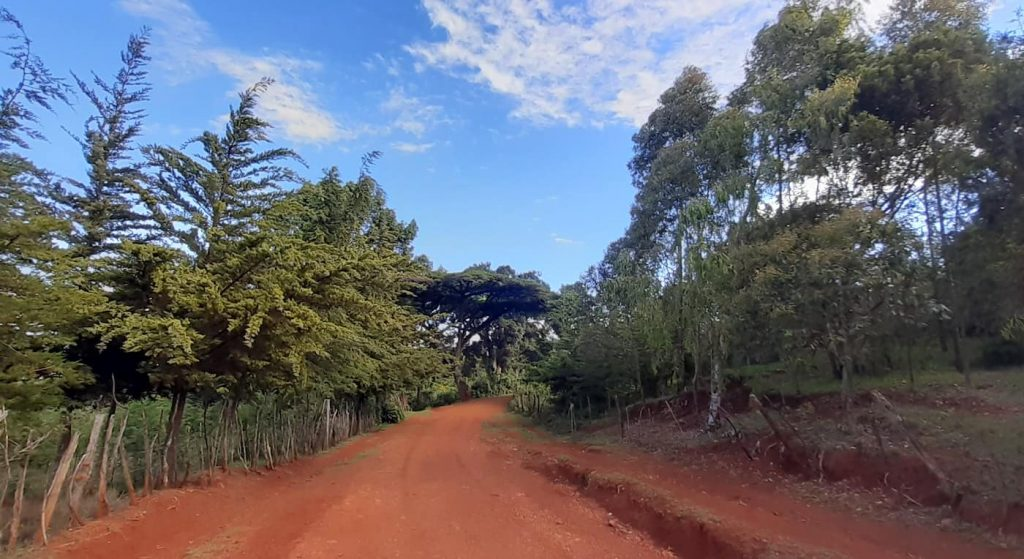 Day 6 of running in Iten - blue skies