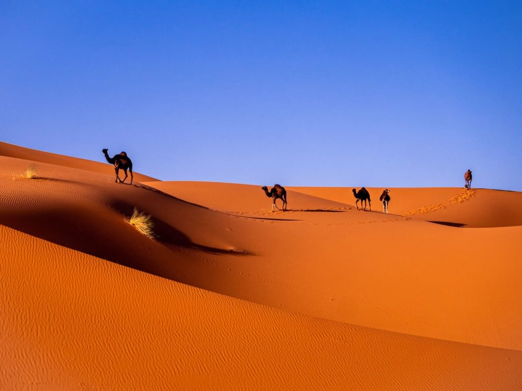 Morocco, home to Arabic, the most widely spoken African language