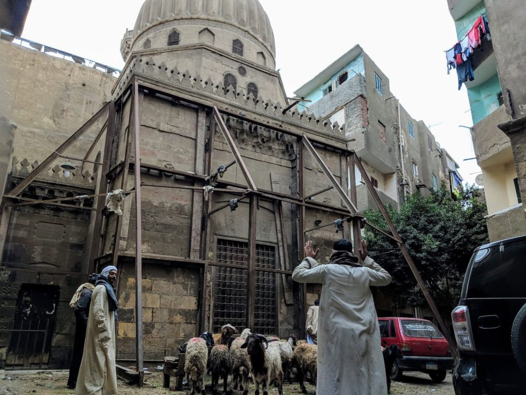 Goats living in cairo in the inner city with someone managing them