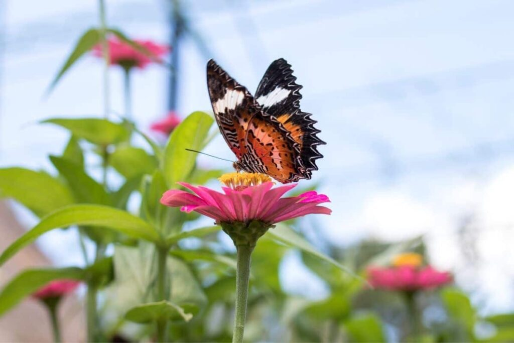beautiful in arabic butterfly on flower nature